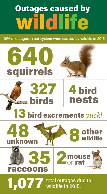 We Energies News: Squirrels: wildlife creature most likely