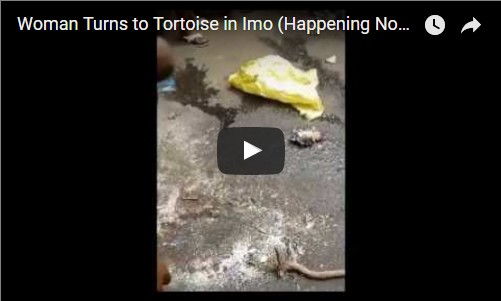 VIDEO: Woman Turns To Tortoise In Imo (Happening Now)