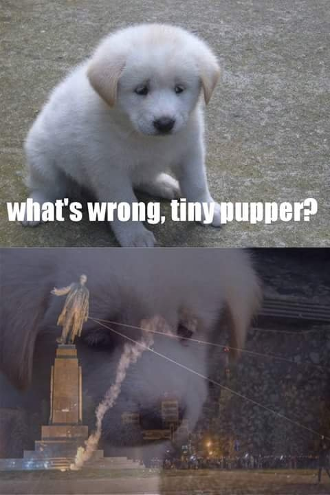 What's wrong, tiny pupper?