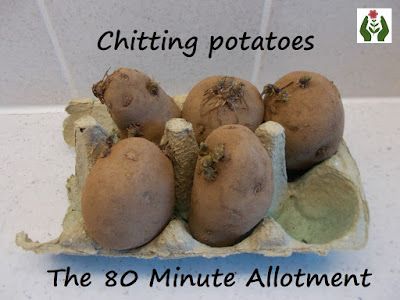 Chitting potatoes The 80 Minute Allotment The Green Fingered Blog