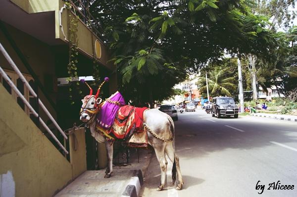 vaci-in-India