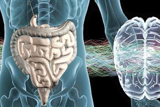 A Microbiota de um Ocidental, quais as consequências?