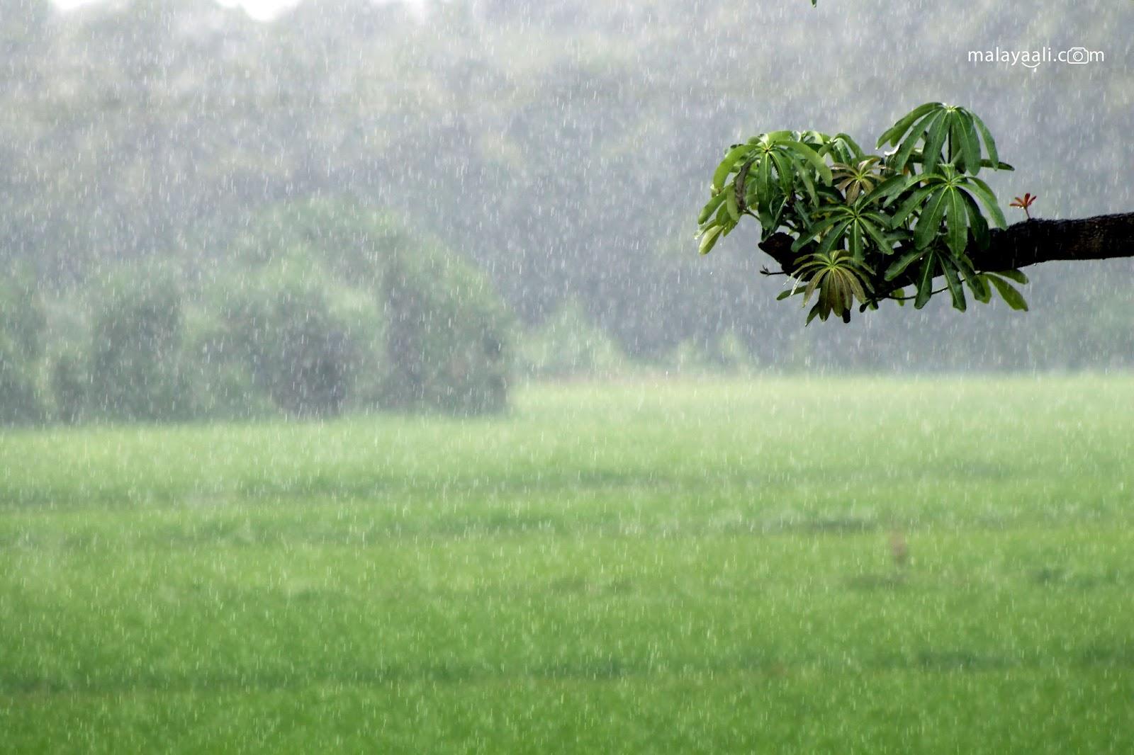 Malayali, Peringode, Malayali Peringode, Rain, Mansoon, Kerala, Sukrutham, മഴ, മലയാളി, പെരിങ്ങോട്, മലയാളി പെരിങ്ങോട്, തുലാവർഷം