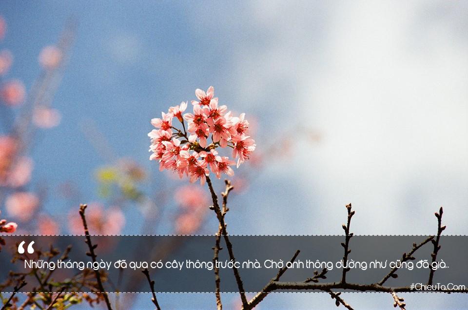 STT Tháng 2 - Status chào Tháng Hai Yêu Nhau Lãng Mạn & Hạnh Phúc