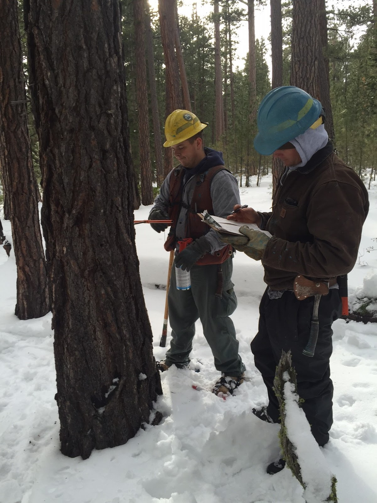 oregon department of forestry s northeast oregon and central oregon districts have partnered with the united states forest service to provide marking crews