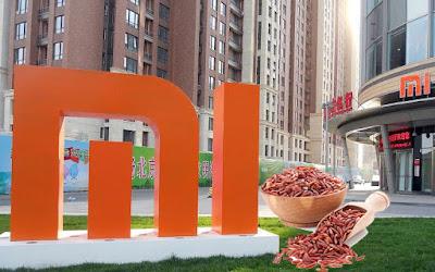 Fakta Sejarah Berdirinya Nama Xiaomi