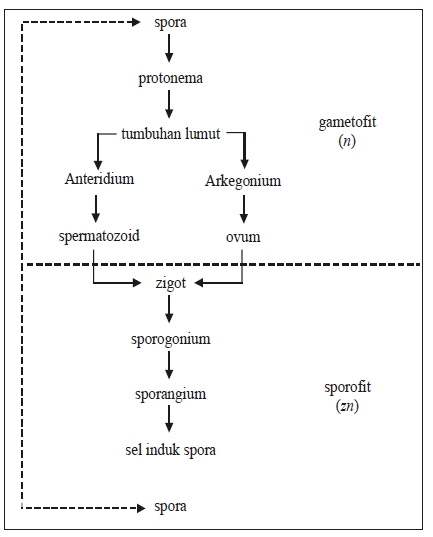 Metagenesisi Tumbuhan Lumut