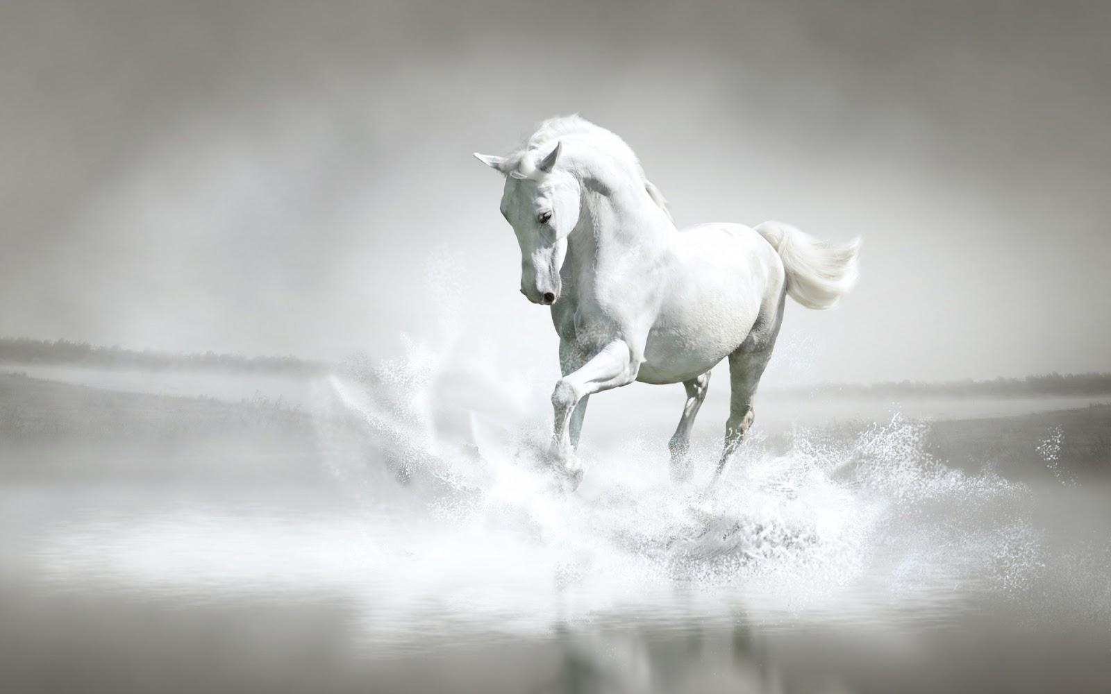 Most Inspiring   Wallpaper Horse Water - Horse-+(4)  HD_349025.jpg