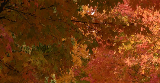 Turning Over a New Leaf...Autumn Appreciation Sale!