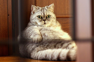 foto de gato gordo