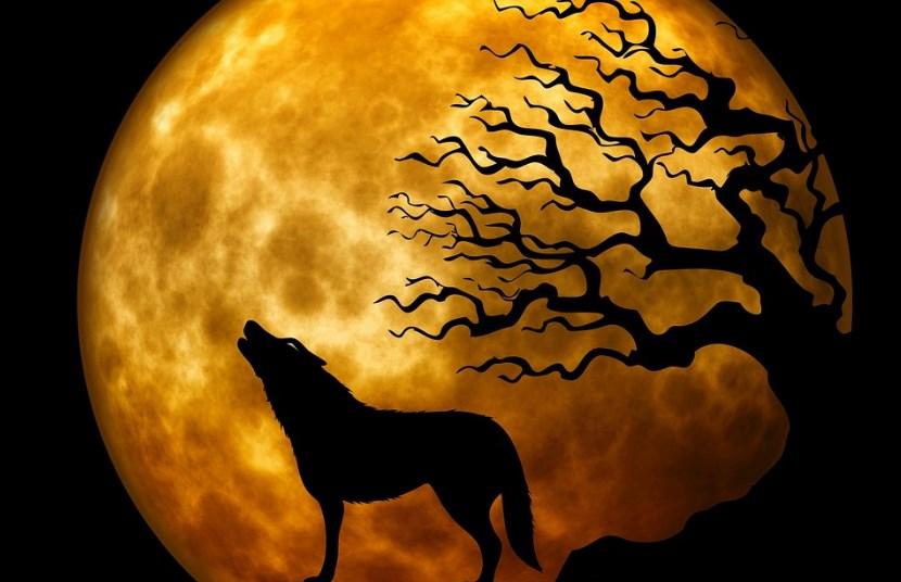 Serigala jadi jadian masuk ke kampung warga memangsa korban yang tidak berdaya dan anak-anak
