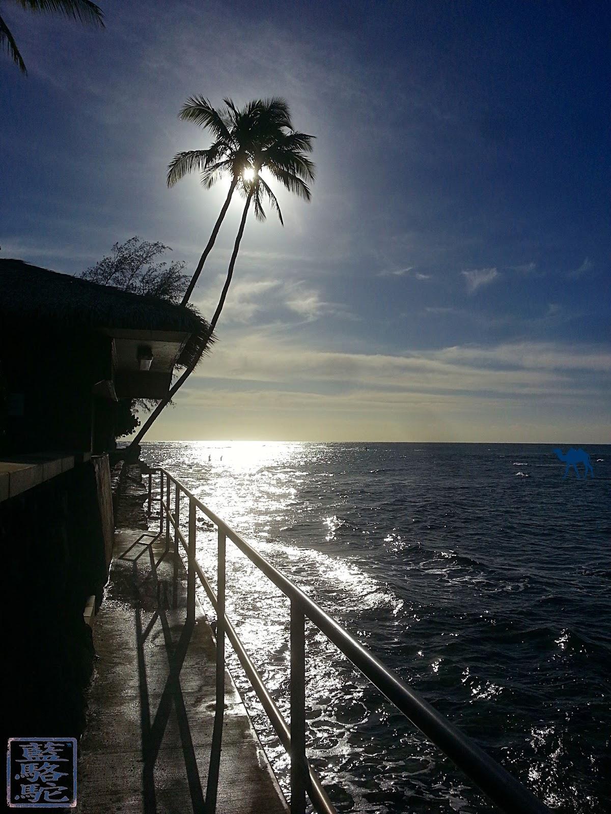 Le Chameau Bleu - Blog Voyage Hawaii - Instantanés d'Hawaii - OAHU