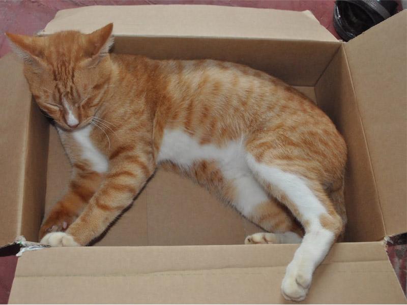 Foto-foto kucing kampung lucu | Kucing gue