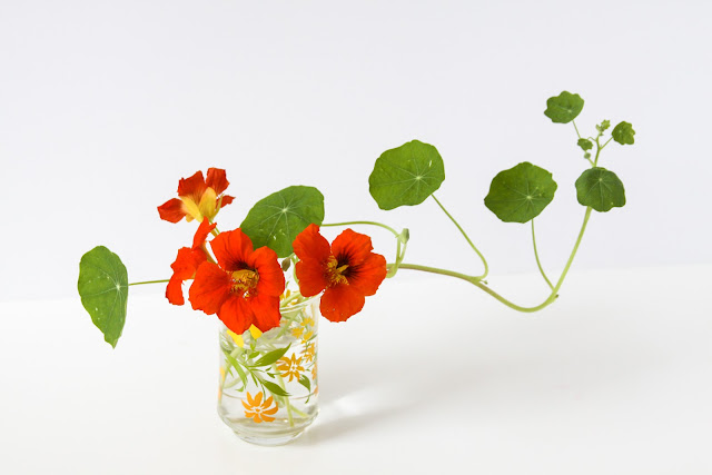 nasturtiums, orange nasturtiums, Anne Butera, My Giant Strawberry