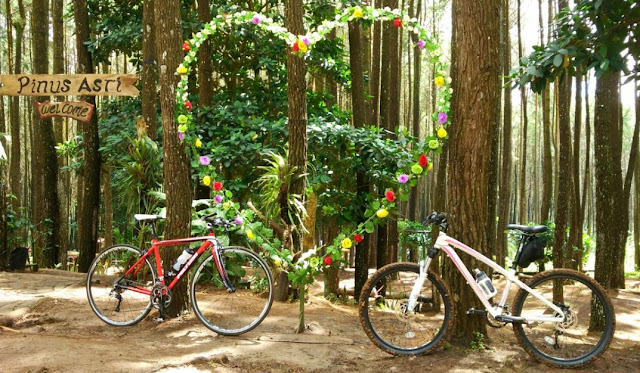 Harga Ticket Masuk Hutan Pinus Pengger Terbaru