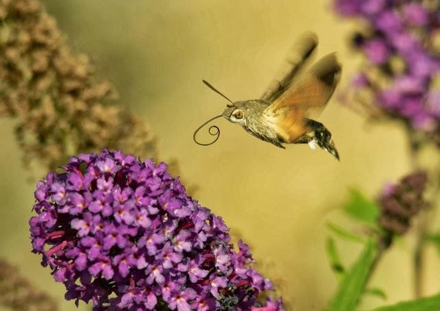 Bird Life Moth Food Cycle