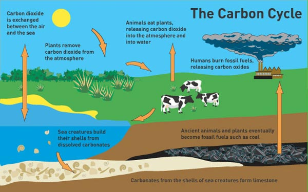 do fossil fuels contain carbon 14 dating