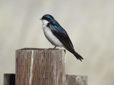 Modoc National Wildlife Refuge California birding hotspot