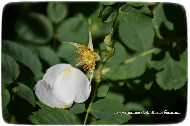 цветочная математика