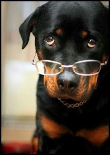 Rottweiler intelligene