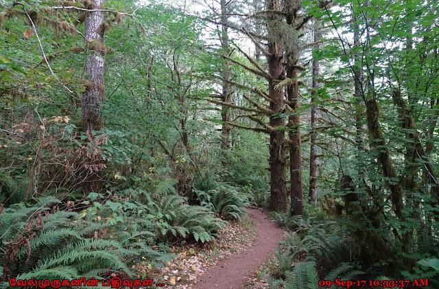 Wilson River Trail Tillamook