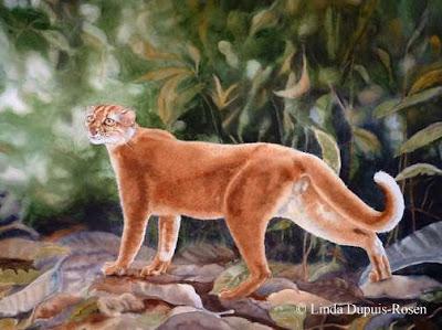 Jual Kucing Merah,  Harga Kucing Merah,  Toko Kucing Merah,  Diskon Kucing Merah,  Beli Kucing Merah,  Review Kucing Merah,  Promo Kucing Merah,  Spesifikasi Kucing Merah,  Kucing Merah Murah,  Kucing Merah Asli,  Kucing Merah Original,  Kucing Merah Jakarta,  Jenis Kucing Merah,  Budidaya Kucing Merah,  Peternak Kucing Merah,  Cara Merawat Kucing Merah,  Tips Merawat Kucing Merah,  Bagaimana cara merawat Kucing Merah,  Bagaimana mengobati Kucing Merah,  Ciri-Ciri Hamil Kucing Merah,  Kandang Kucing Merah,  Ternak Kucing Merah,  Makanan Kucing Merah,  Kucing Merah Termahal,  Adopsi Kucing Merah,  Jual Cepat Kucing Merah,  Kucing Merah  Jakarta,  Kucing Merah  Bandung,  Kucing Merah  Medan,  Kucing Merah  Bali,  Kucing Merah  Makassar,  Kucing Merah  Jambi,  Kucing Merah  Pekanbaru,  Kucing Merah  Palembang,  Kucing Merah  Sumatera,  Kucing Merah  Langsa,  Kucing Merah  Lhokseumawe,  Kucing Merah  Meulaboh,  Kucing Merah  Sabang,  Kucing Merah  Subulussalam,  Kucing Merah  Denpasar,  Kucing Merah  Pangkalpinang,  Kucing Merah  Cilegon,  Kucing Merah  Serang,  Kucing Merah  Tangerang Selatan,  Kucing Merah  Tangerang,  Kucing Merah  Bengkulu,  Kucing Merah  Gorontalo,  Kucing Merah  hewan indonesia,  Kucing Merah  jurnal kedokteran hewan,  Kucing Merah  dokter hewan 24 jam,  Kucing Merah  permainan hewan melahirkan,  Kucing Merah  rs hewan,  Kucing Merah  hewan qurban,  Kucing Merah  kambing kurban,  Kucing Merah  hewan terbesar di dunia,  Kucing Merah  hewan kurban,  Kucing Merah  ciri ciri hewan vertebrata,  Kucing Merah  ciri ciri hewan,  Kucing Merah  ciri ciri hewan laut,  Kucing Merah  hewan yang terdiri dari satu sel disebut,  Kucing Merah  hewan dari h,  Kucing Merah  nama untuk hewan peliharaan,  Kucing Merah  hewan,  Kucing Merah  games hewan peliharaan,  Kucing Merah  dokter hewan murah,  Kucing Merah  klinik hewan jakarta,  Kucing Merah  dokter hewan di jakarta,  Kucing Merah  video hewan hewan,  Kucing Merah  dunia hewan,  Kucing Merah  kedokteran hewan, 