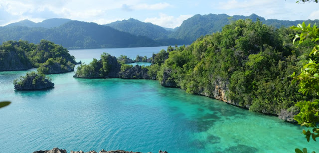 Wildlife haven of Sulawesi much younger than first thought, according to new research