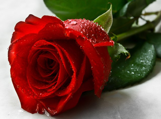 Pic Of Flowers Rose