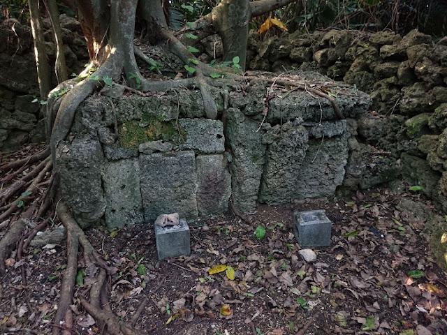 神山遺跡の写真