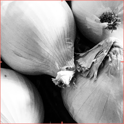 high contrast onion photo with viewfinder tool for my value study - by Amy Lamp