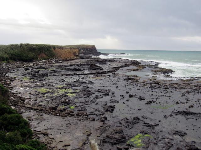El bosque fosilizado de Curio Bay