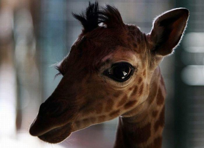 Muthu: Cute baby giraffes