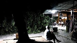 Pohon Sawo Berumur Ratusan Tahun Di Halaman Masjid Kuno Tamanarum Roboh