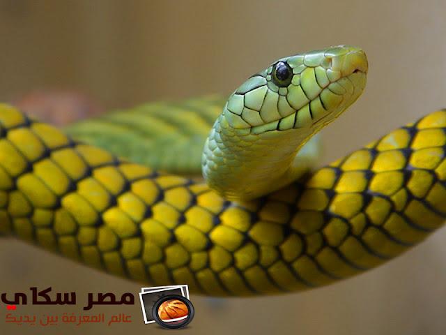 ماذا تعنى الثعابين لكثير من الناس Snakes