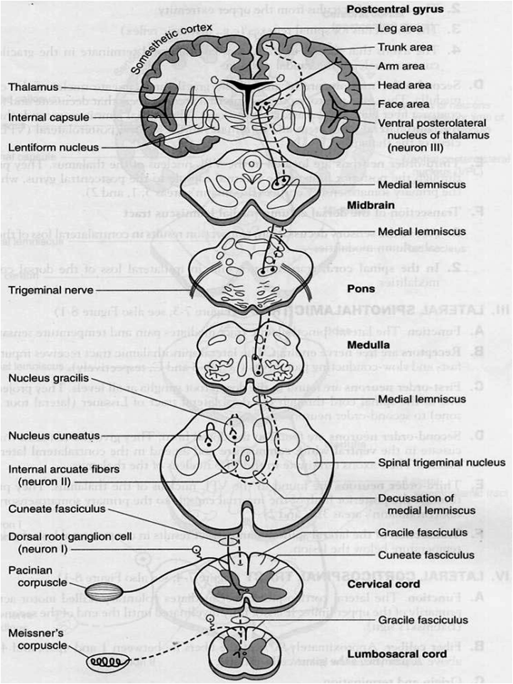 MBBS Medicine (Humanity First): Cerebrospinal tracts