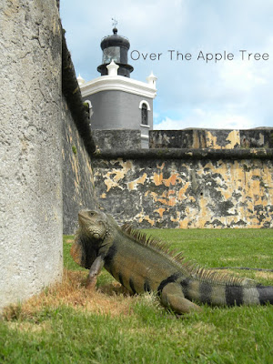 Puerto Rico, Wordless Wednesday by Over The Apple Tree