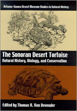 The Sonoran desert tortoise
