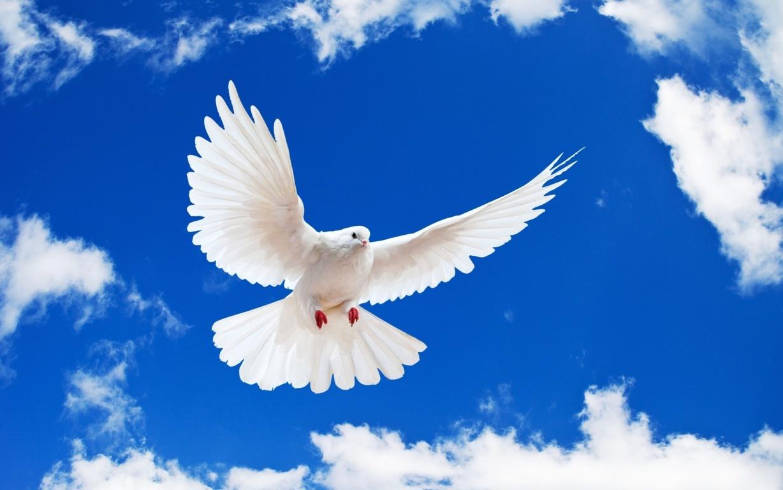 Roh Kudus Memberi Daya Kekuatan