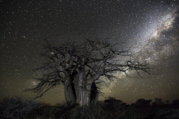 Beth Moon fotografia natureza diamond nights árvores céu noturno estrelas