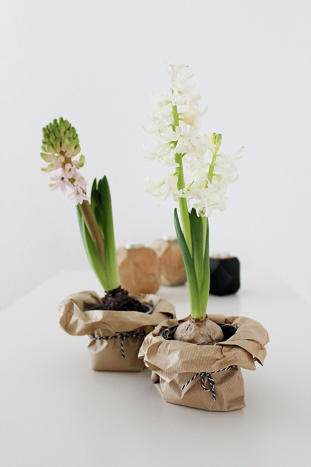DIY Hyazinthen Blumentopf basteln im nordischen Stil mit Packpapier