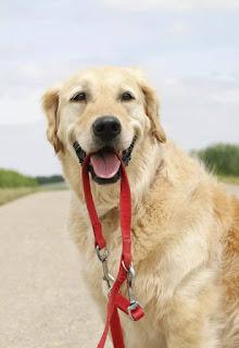 собаки и
