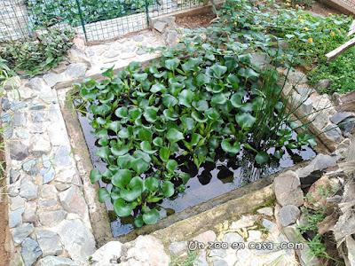 [Imagen: estanque-jacintos.jpg]