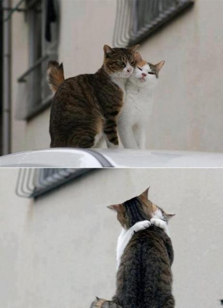 Download 87+  Gambar Kucing Romantik Paling Imut