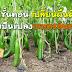 9 ขั้นตอน เปลี่ยนผืนดินให้เป็นแปลงเกษตรอินทรีย์