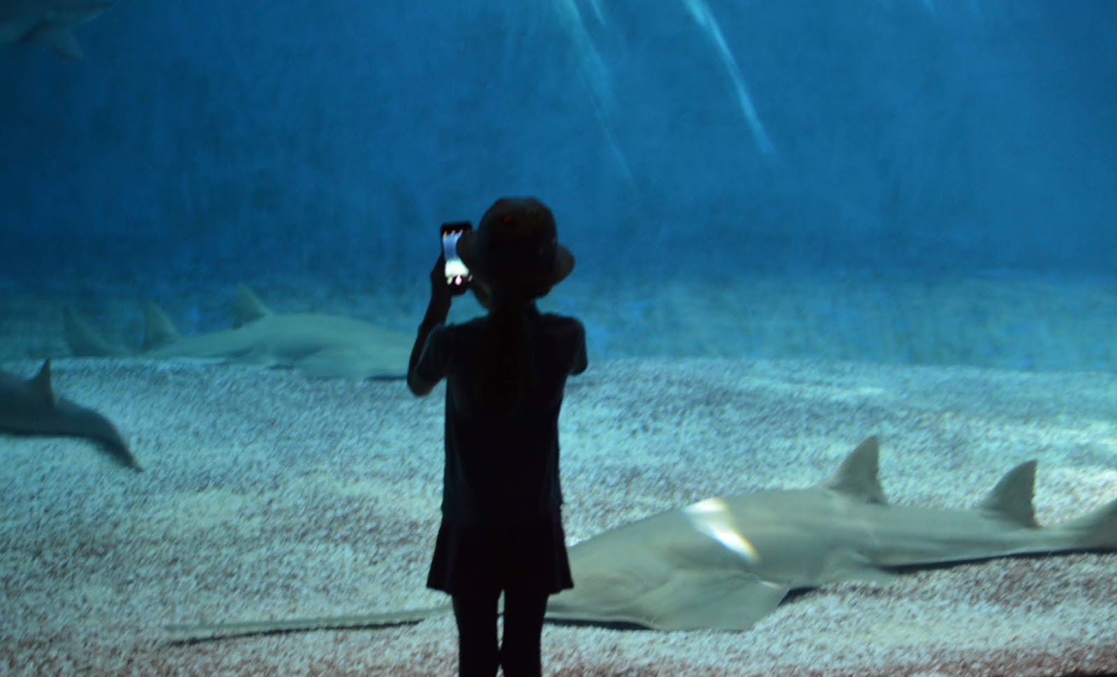 How to spend a weekend in Genoa with kids - Genoa aquarium sharks