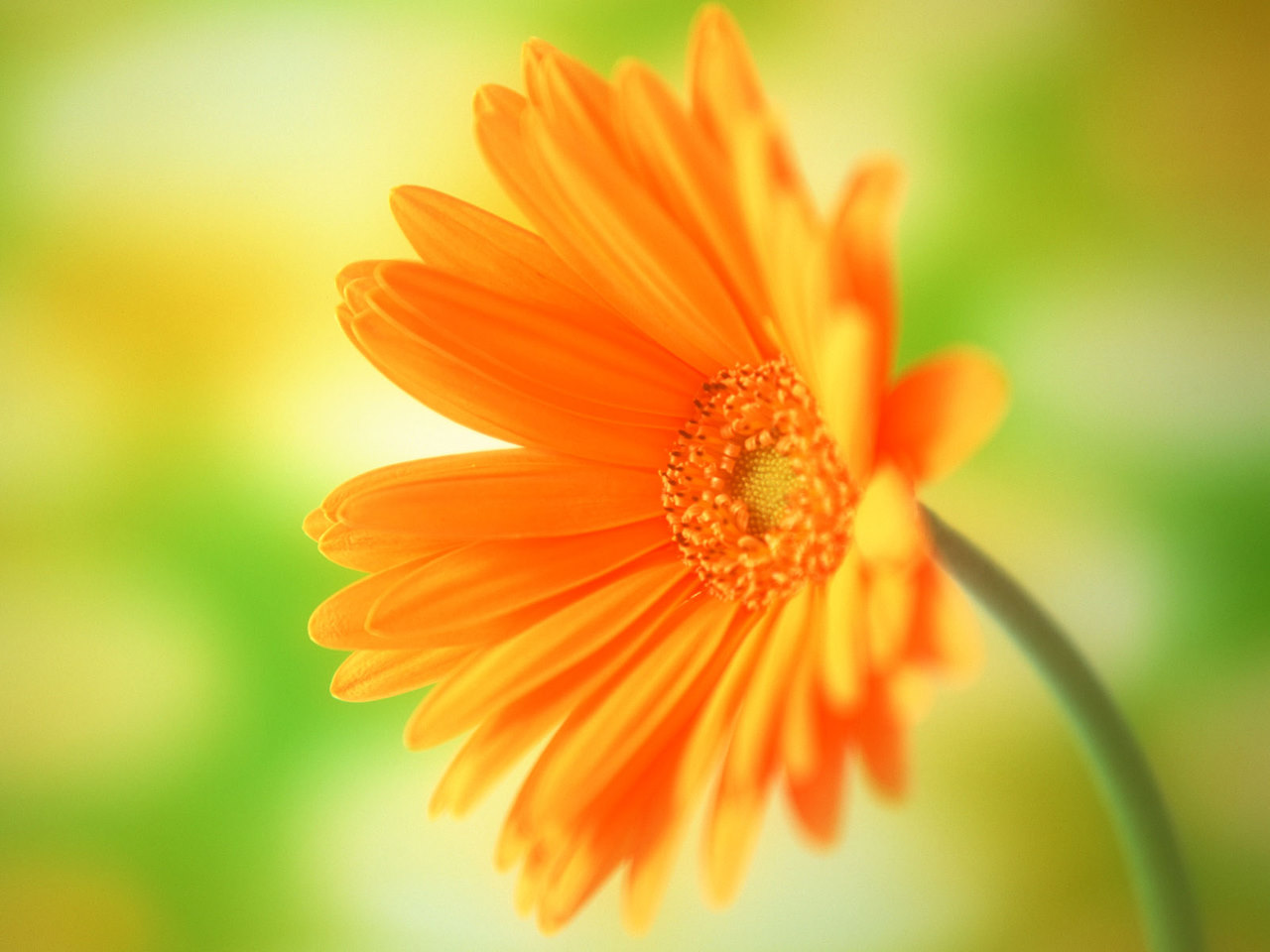 LATEST WALLPAPERS: Flowers Wallpapers, Flowers Animated