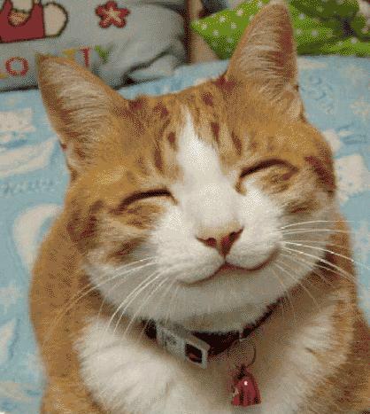 NEW Cat Battle (2014 October) Funny cat vines - Ultimate ...   Funny Smiling Cat
