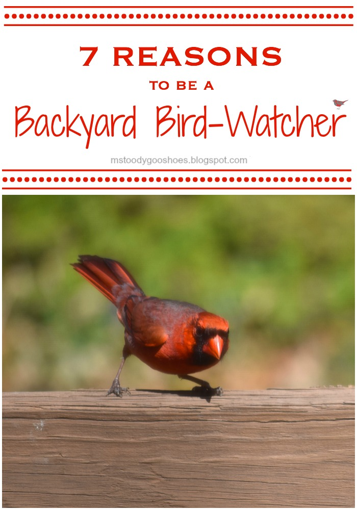7 Reasons to be a Backyard Bird-Watcher | Ms. Toody Goo Shoes