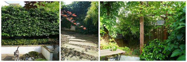 Back garden (left side) - wwwgrowourown.blogspot.com