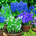 Free Flower Bulbs Worldwide